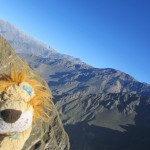 Lewis marvels at the beauty of the Colca Canyon