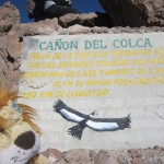 Lewis the Lion reads the information on the Colca Canyon
