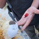 The parasite produces the cochineal dye
