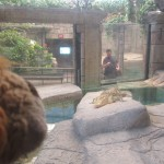 The Golden Crocodile watches Lewis the Lion carefully