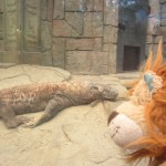 Lewis the Lion watches the world's largest lizard sleeping: the Komodo Dragon