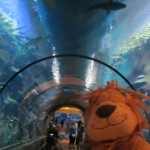Lewis the Lion loves seeing the fish swim around him in this special tunnel
