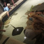 Lewis the Lion sees some children stroking the stingrays too