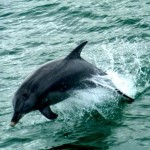 Kate snaps another photo of a dolphin jumping from the water