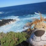 Lewis the Lion visits Nobbies on Phillip Island