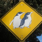 Watch out for Little Penguins!