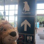 Lewis the Lion heads for the Little Penguin viewing spot