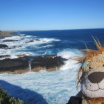 Lewis the Lion looks along the coast to where the Little Penguins will appear