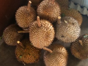 The bad smelling durian fruit