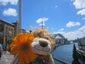 Lewis the Lion gets his first proper view of the Sydney Harbour Bridge