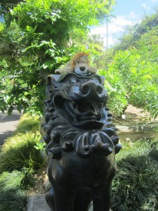 Lewis the Lion greets another lion in Sydney's Botanical Gardens