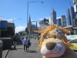 Lewis the Lion loves the Melbourne city life