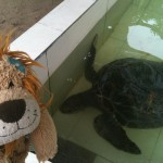 Lewis the Lion meets Jo, the green turtle