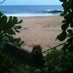 Lewis the Lion sees the beach where the turtles come to lay their eggs