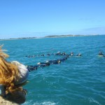 Lewis the Lion watches the dolphins swim around the chain of snorkellers