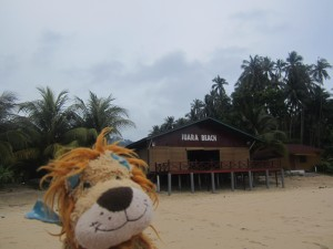 Lewis the Lion is happy to make Juara Beach his home for the next few weeks