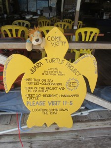 Lewis the Lion is intrigued to learn more about the Juara Turtle Project