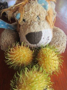 Lewis the Lion checks out the rubbery rambutans