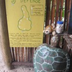 Defending the last turtle nesting beach on Tioman