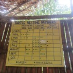Charts carefully track turtle nesting numbers