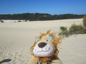 Lewis the Lion climbs some sand dunes