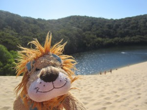 Lewis the Lion relaxes by the deep Lake Wabby