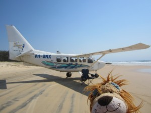 Lewis the Lion looks longingly at the lightweight aircraft