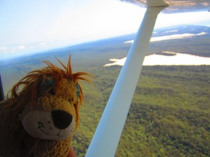 Lewis the Lion sees the rainforest and lakes from above