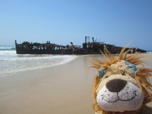 Lewis the Lion looks on the shipwreck near Eli Creek