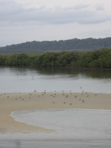 Birds gather on the banks as if to greet a final farewell to the tourists