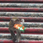 A cheeky monkey runs off with a packet of crisps!