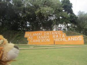 Welcome to the Cameron Highlands!