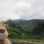 Lewis the Lion gets his first view of the tea plantations