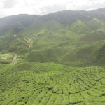 A stunning view over the Cameron Valley tea plantations