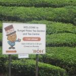 Boh Tea is one of Malaysia's top tea brands