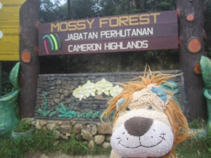 Lewis has a hike to the Mossy Forest