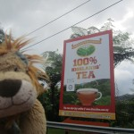 Lewis the Lion has a cup of tea in the Cameron Highlands