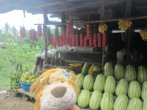 Lewis loves the fresh fruit sold by the roadside in Sulawesi