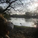 Lewis the Lion spots a stork