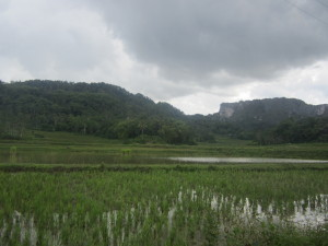 The rain swoops over the paddy fields