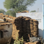 Cow dung is also used to build shelter