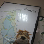 Lewis the Lion visits Keoladeo National Park
