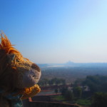 Lewis the Lion sees the Taj Mahal for the very first time