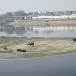 Looking onto the Yamuna River