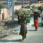 Locals carry bracken on their heads
