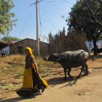 A woman leads a cow through the streets