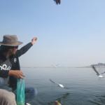 Dushyant feeds the seagulls