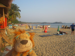 Lewis the Lion enjoys the Palolem beach