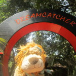 Lewis the Lion stays in the amazing Dreamcatcher resort
