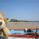 Lewis the Lion chills out for one last evening in Palolem